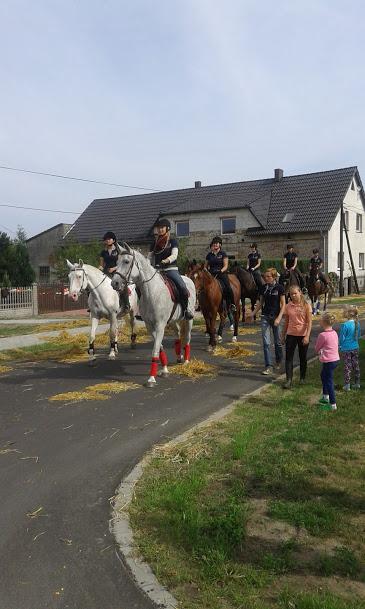 Konie z naszej stadniny (3)